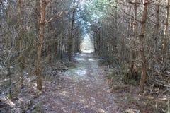 Geheimzinnige weg in het bos Royalty-vrije Stock Afbeeldingen