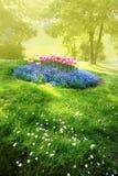 Geheimzinnige zonnige tuin Stock Afbeeldingen