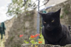 Geheimzinnige zwarte kat Royalty-vrije Stock Foto