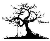 Geheimzinnigheid boom Stock Foto's