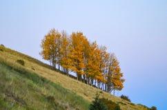 Geheld geel bosje van apens op heuvel stock foto's