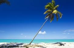 Gehelde Palm bij Caraïbisch Strand, Antigua royalty-vrije stock fotografie