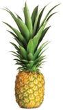 Gehele ananas   Royalty-vrije Stock Foto