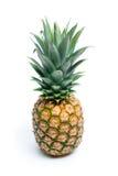 Gehele ananas Stock Fotografie