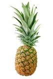 Gehele ananas Stock Afbeelding