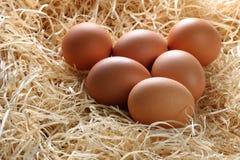Gehele Bruine Eieren in Stro Stock Afbeelding