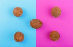 Gehele en organische kokosnoten op blauwe en roze achtergrond Vijf gehele, verse, organische en tropische vruchten van kokosnoten Stock Afbeelding