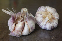 Gehele garlics Royalty-vrije Stock Foto's