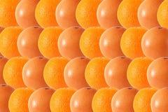 Gehele grapefruit en oranje vruchten abstract naadloos patroon Royalty-vrije Stock Foto's