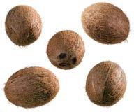 Gehele kokosnoten Royalty-vrije Stock Foto's