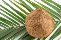 Gehele kokosnoten met bladeren op wit Stock Foto
