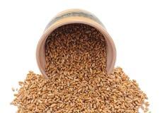 Gehele korrel van tarwe met een kruik stock fotografie