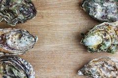 Gehele oesters op hout stock foto's
