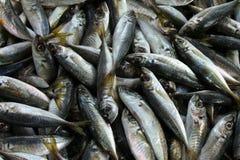 Gehele, verse sardines bij de Fethiye vissenmarkt Royalty-vrije Stock Fotografie