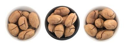 Gehele Zoete Fried Pecan Nut of Carya Illinoinensis met Gebarsten Shell Isolated Stock Afbeeldingen