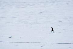Gehen auf das Eis Stockbild