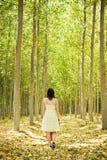 Gehen auf Holz Stockfotografie