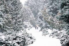 Gehen auf Schnee Lizenzfreies Stockfoto