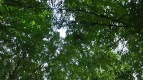 Gehen in den Wald stock video footage