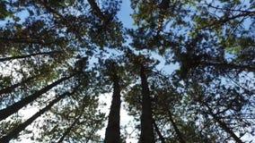 Gehen in den Wald stock footage