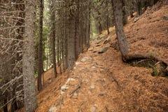 Gehen in den Wald an einem bewölkten Tag am Fall Keine Leute herum lizenzfreies stockfoto