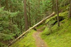 Gehen in den Wald an einem bewölkten Tag am Fall Keine Leute herum lizenzfreie stockbilder