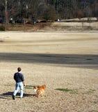 Gehen der Hund Lizenzfreie Stockfotografie