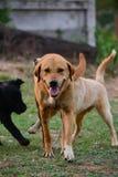 Gehen der Hund lizenzfreie stockbilder