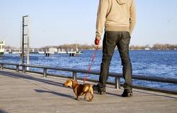 Gehen der Hund stockbilder