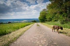 Gehen der Hund in Deutschland Lizenzfreie Stockfotos