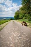 Gehen der Hund in Deutschland Lizenzfreies Stockfoto