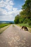 Gehen der Hund in Deutschland Stockfoto