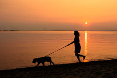 Gehen der Hund entlang dem Strand Stockfoto