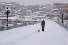 Gehen der Hund im Blizzard Lizenzfreie Stockbilder