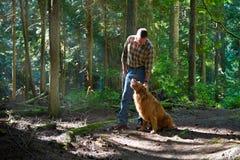 Gehen der Hund im Holz lizenzfreie stockbilder