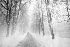 Gehen der Hund im Nebel Stockbilder