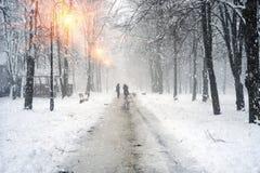 Gehen der Hund im Nebel Lizenzfreies Stockfoto