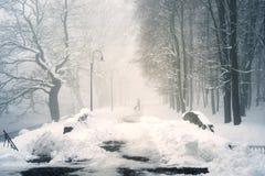 Gehen der Hund im Nebel Stockfotografie
