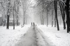 Gehen der Hund im Nebel Lizenzfreie Stockfotos