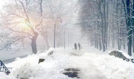 Gehen der Hund im Nebel Lizenzfreie Stockbilder