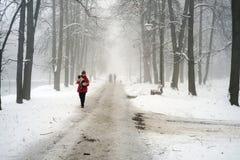 Gehen der Hund im Nebel Lizenzfreies Stockbild