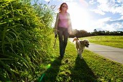 Gehen der jungen Frau und des goldenen Apportierhunds lizenzfreies stockbild