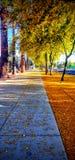Gehen der orange Blumenstraße lizenzfreies stockfoto