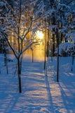 Gehen in die Wintersonne Stockfoto