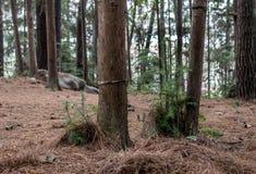 Gehen durch das Holz in China Stockfotografie