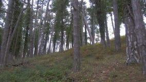 Gehen durch das Holz mit Farn stock video footage