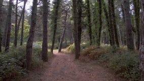 Gehen durch das Holz mit Farn stock footage