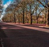 Gehen durch die Straße mit Bäumen stockbilder