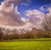 Gehen durch die Straße mit Bäumen stockfotografie