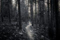 Gehen durch einen Wald Lizenzfreies Stockfoto